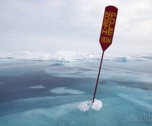Покорение Северного полюса: победители и проигравшие
