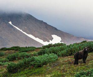 Начальник Камчатки: команда Men's Health знакомится с медведем